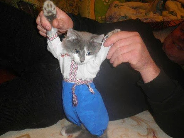 Funny cats - part 79 (35 pics + 10 gifs), kitten wears costume