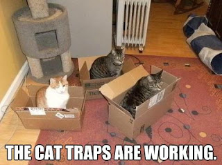Small boxes are available for use with even the tiniest of kittens. Cat Houses EMGN3 & 12 Effective Ways To Trap Your Mischevious Cat Aboutintivar.Com