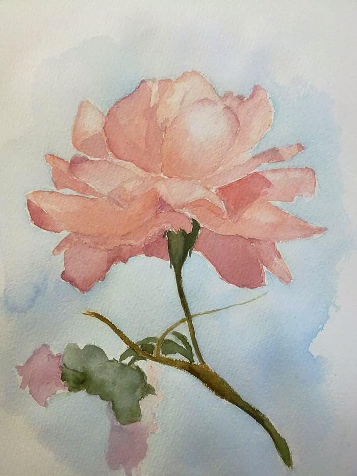 acuarela de una rosa en base a modelo fotografico