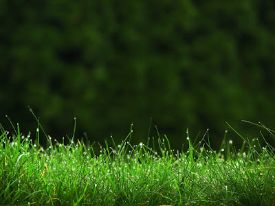 rumput hijau damai