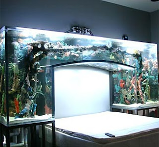 Evelyn lozada fish tank bed pix magazine for Fish tank bed