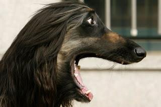 Клонований собака з Китаю