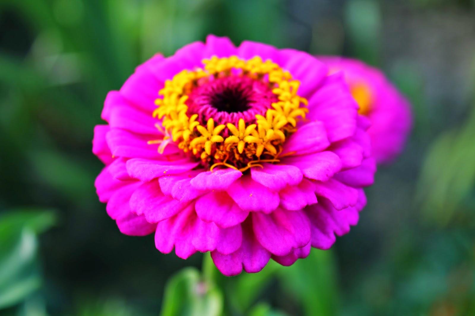 Летние цветы название фото