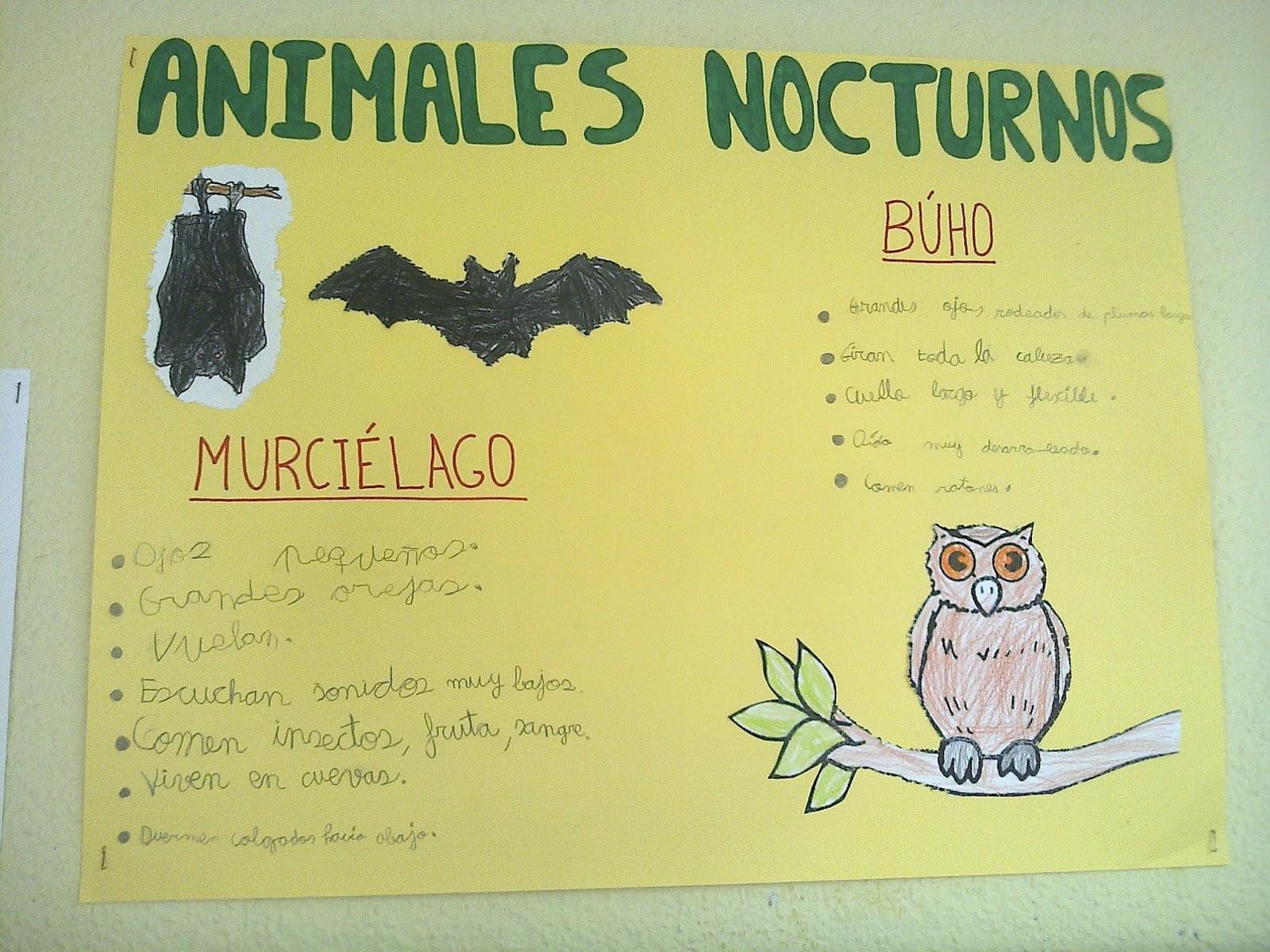 Lujo Dibujos Para Colorear De Animales Nocturnos Regalo - Dibujos ...