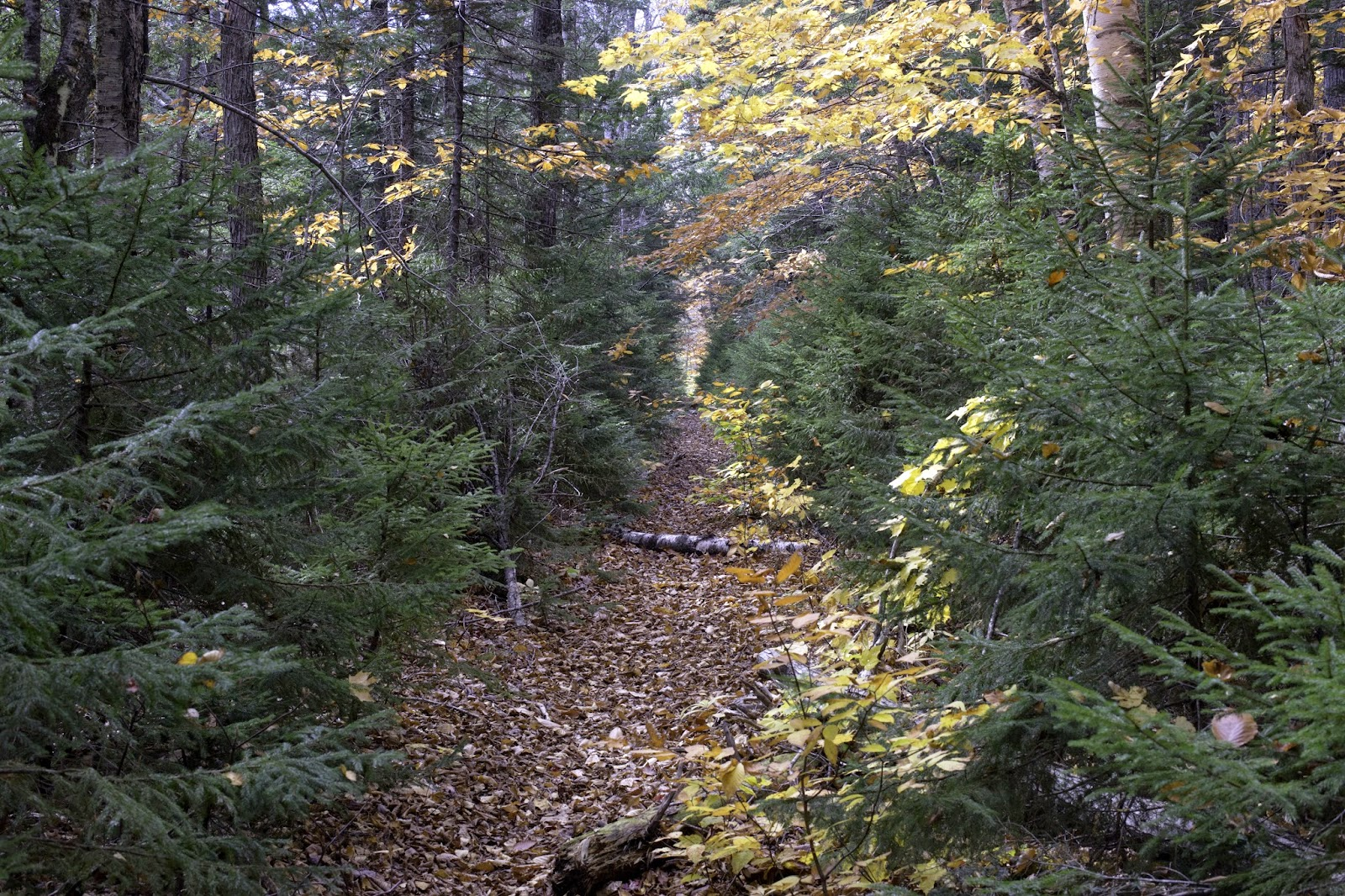 The grade slipped into the river & on a path with heart: Wild River Backpacking 10/15-10/16/14