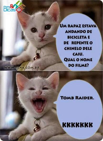 Fotos de piadas de gatinho do Facebook