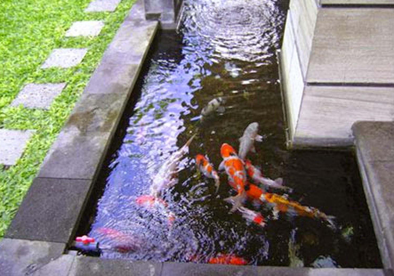 Tukang Taman Kalimantan desain kolam ikan koi minimalis