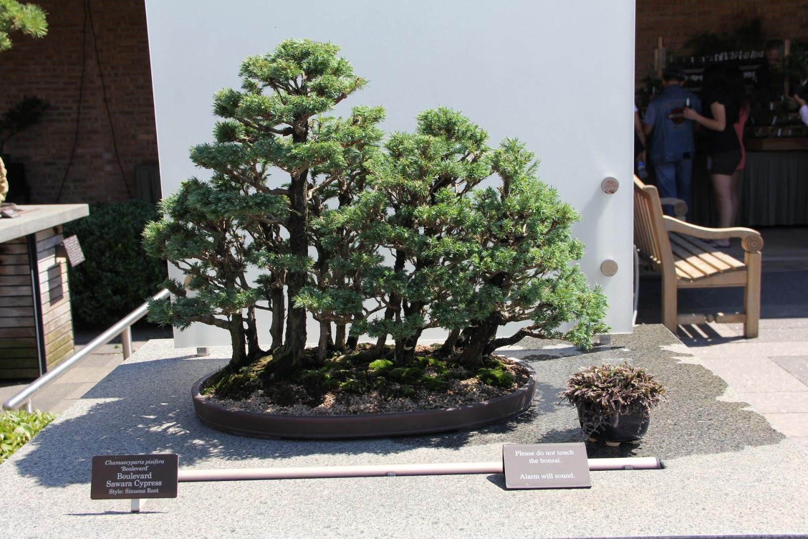 Okruchy I Ziarenka Chicago Botanic Garden III Bonsai