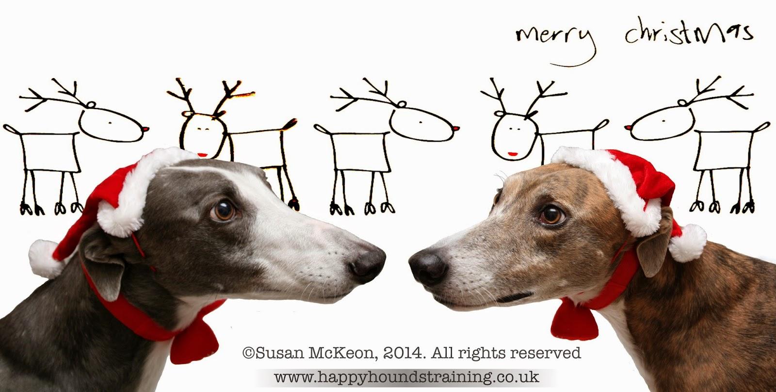 Image@ Two greyhounds wearing Christmas hats.