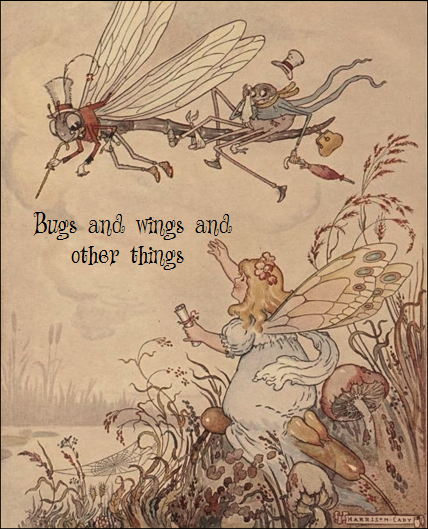 'Bugs and wings and other things'