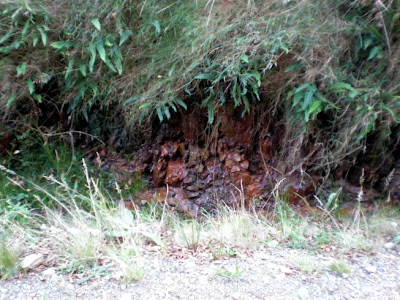 Ruta por As Fragas do Eume P9300087LQ