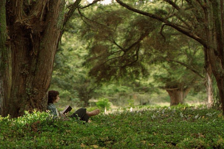 Frodo Under Tree Lord Of The Rings