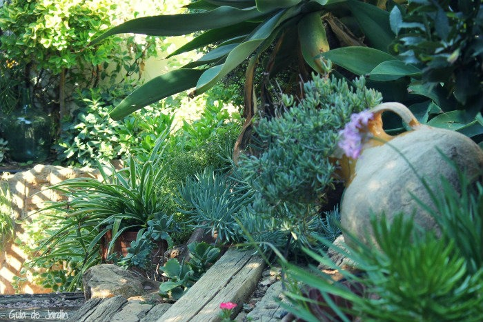 Combinar suculentas en el jard n guia de jardin - Un jardin para mi ...