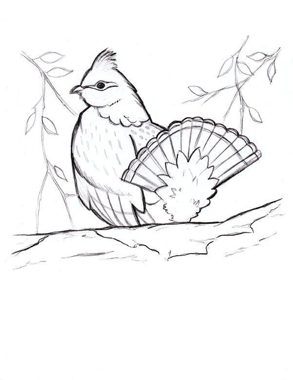 how to find ruffed grouse
