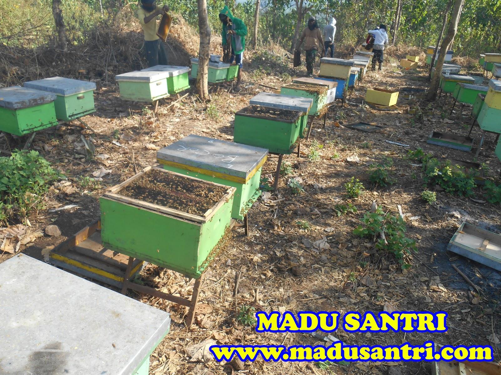 jual madu asli murni alami di magelang grosir madu murni