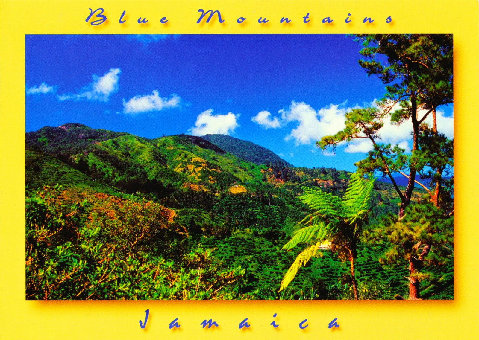 blue mountain peak, jamaica, postcard, coffee
