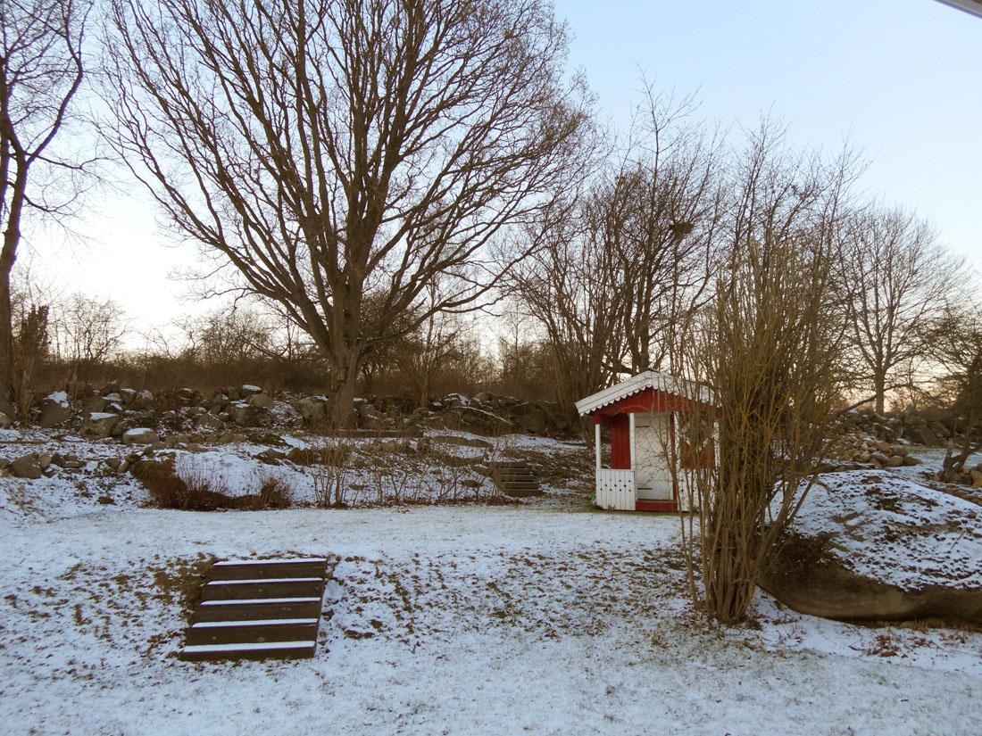 Il mio giardino, 5 gennaio 2016