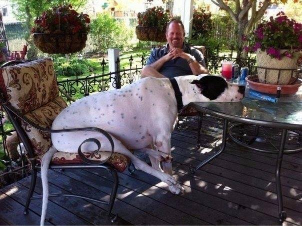 10 Dogs Who Don't Realize That They Are Huge-7 of 10