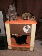The Feline Horde!