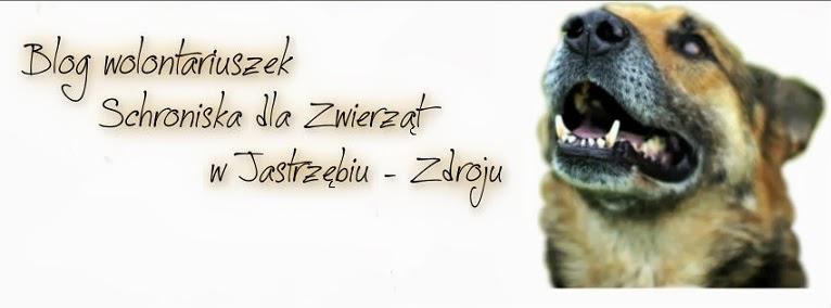 Schronisko dla Bezdomnych Zwierząt w Jastrzębiu-Zdroju