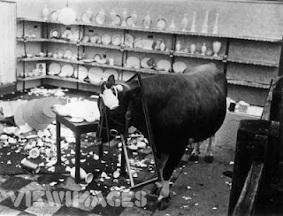a bull who devastated a ceramic shop