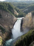 There are moose in Yellowstone Park, but I didn't see any. (yellowstone falls)