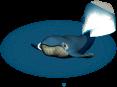 deco whale rescue mama sad anim SW PKDX - Materiais para as Baleias livre de algas no CityVille!