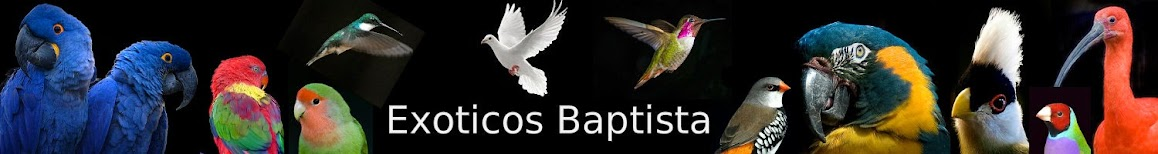 exoticos baptista