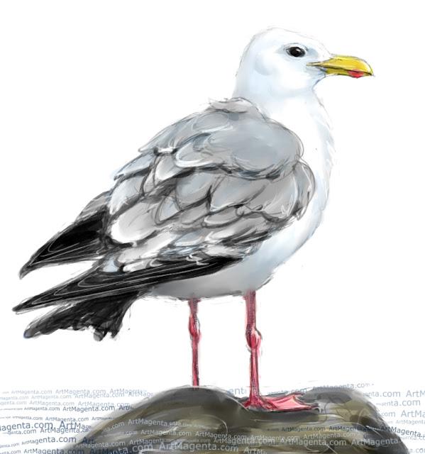 Caspian gull sketch painting. Bird art drawing by illustrator Artmagenta