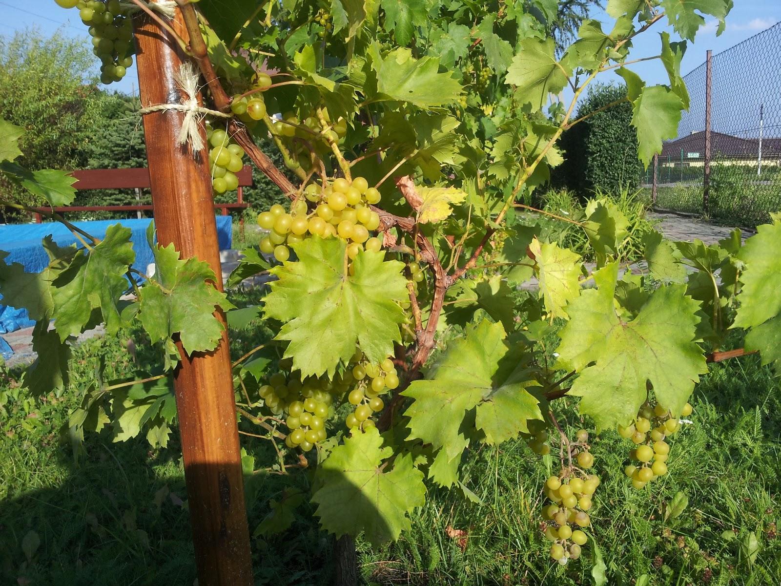 http://1.bp.blogspot.com/-xkM6V80s4xI/USFQhU6i02I/AAAAAAAANc8/Ra8GtD-AoJs/s1600/wino-piaskownica.jpg