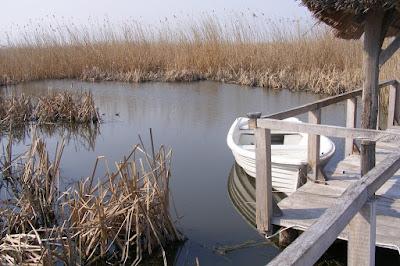 Fantana cu Nuc, Parcul natural Comana, Giurgiu