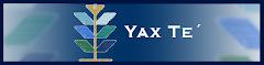 Yax Te´ Books