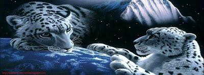 Couverture facebook  timeline tigre