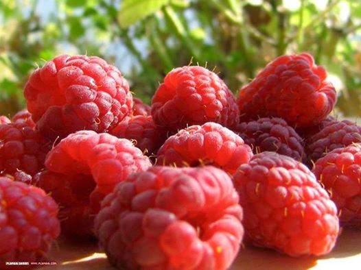 Khasiat Raspberry Untuk Kesuburan Pria