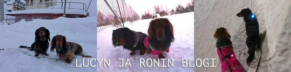 Lucyn ja Ronin blogi
