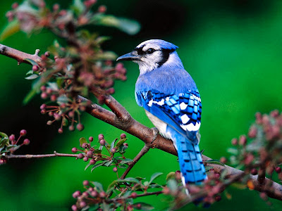Bird Photography hd Wallpaper