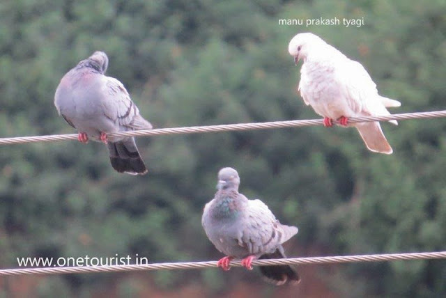 Birds  watching in himachal