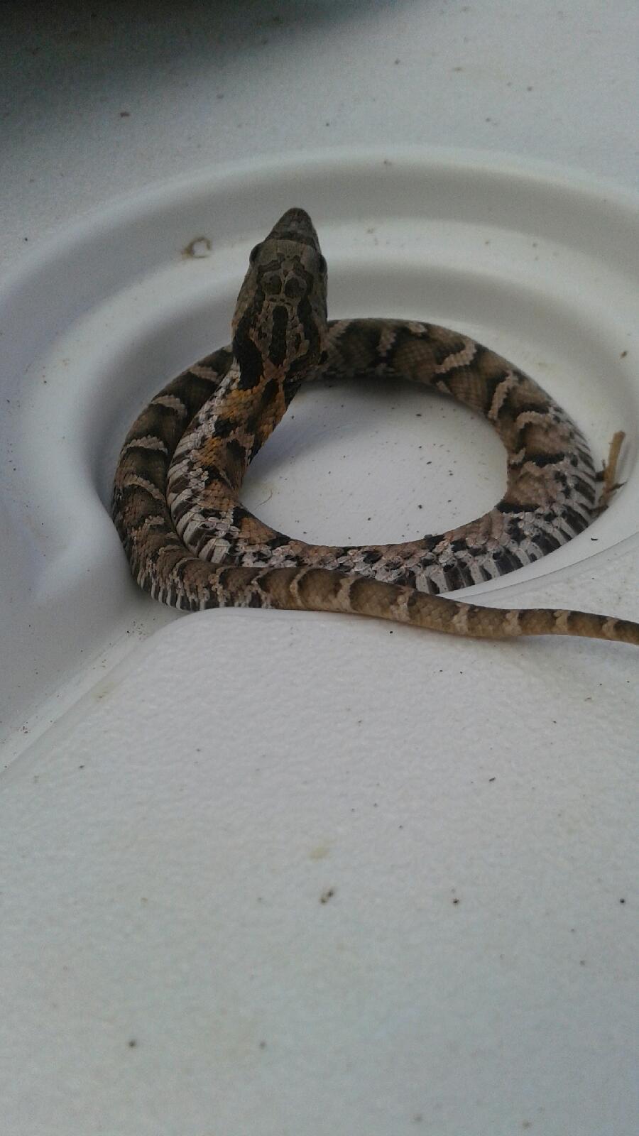 My Hound Cornered This Eight Inch Snake ...