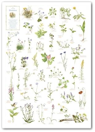 julklappstips, blomster poster, poster träd, poster blommornas abc