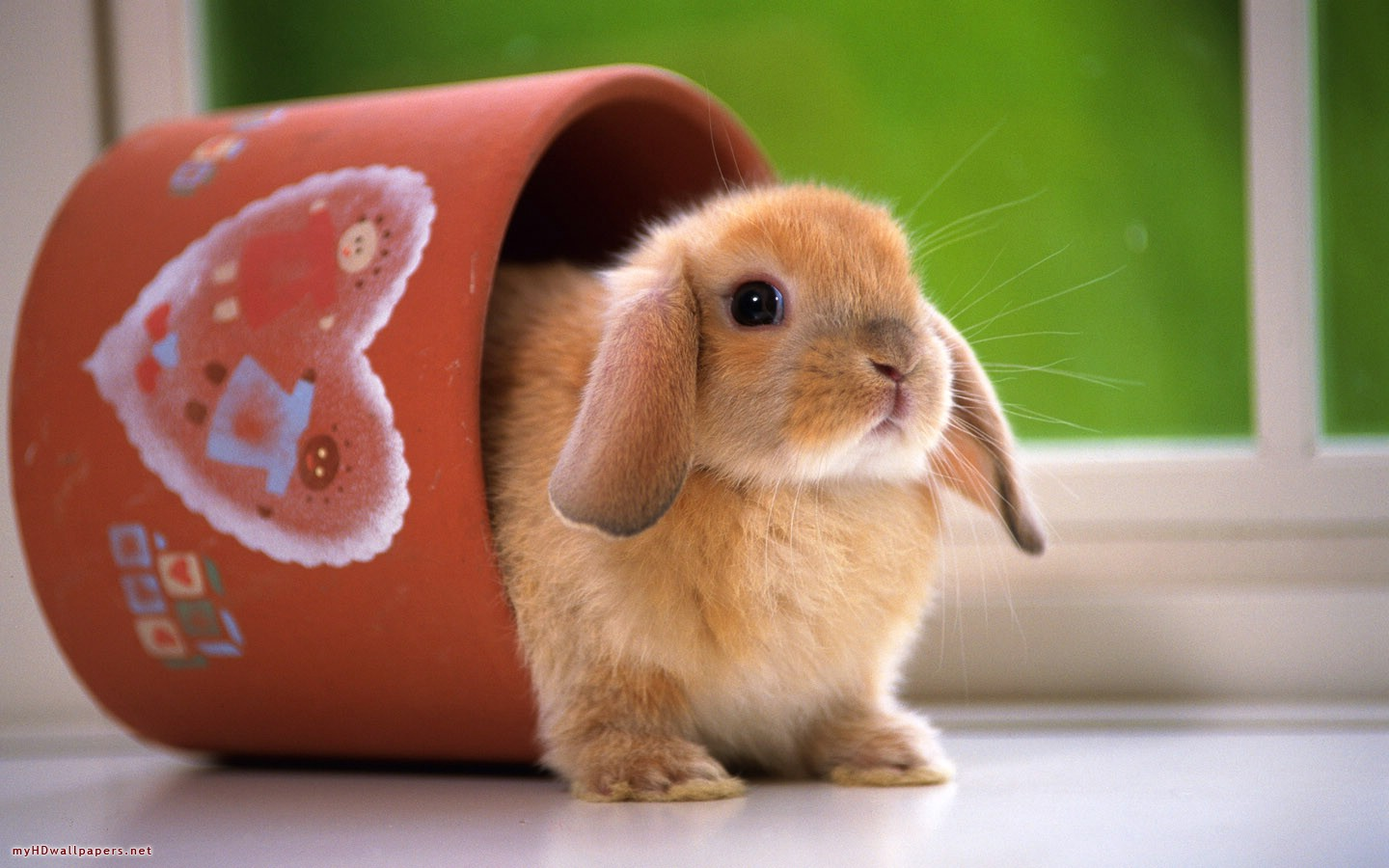 top 33 beautiful and cute rabbit wallpapers in hd - - warner buzz