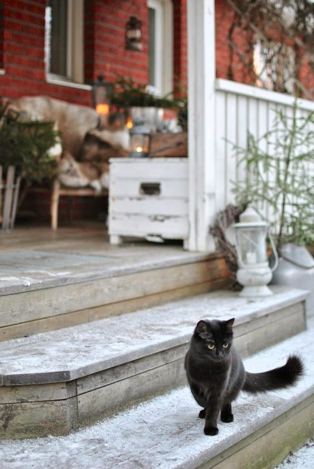 bro veranda kattunge vinter jul