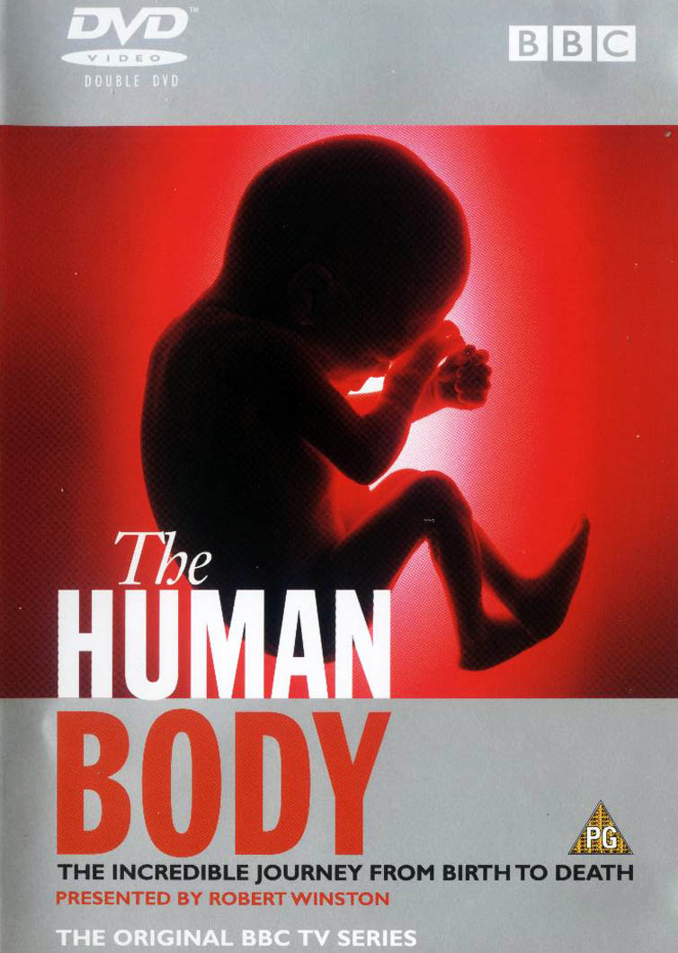 how to build a human body bbc