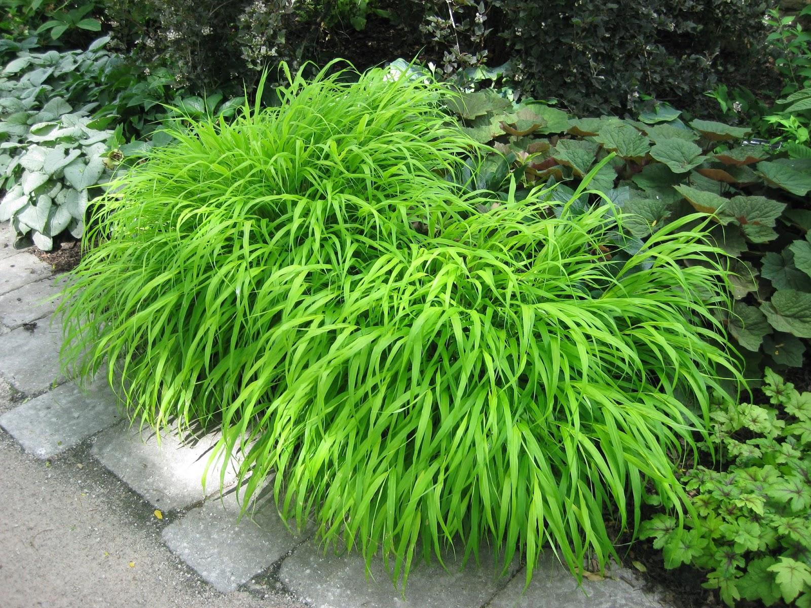 Rotary botanical gardens hort blog hakone grass a for Garden grass
