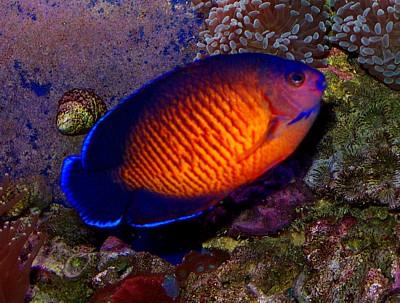 Iffah: [Gambar] Ikan Yang Comel