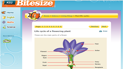 St clares class blog science homework parts of a flower httpbbcbitesizeks2 sciox Choice Image