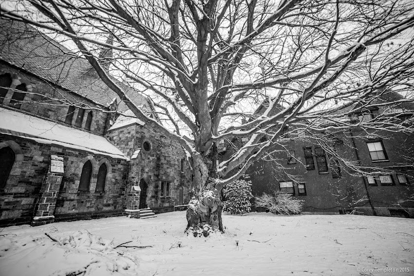 Portland, Maine State Street Copper Beech Tree at St. Luke's Cathedral Winter Janaury 2015 photo by Corey Templeton