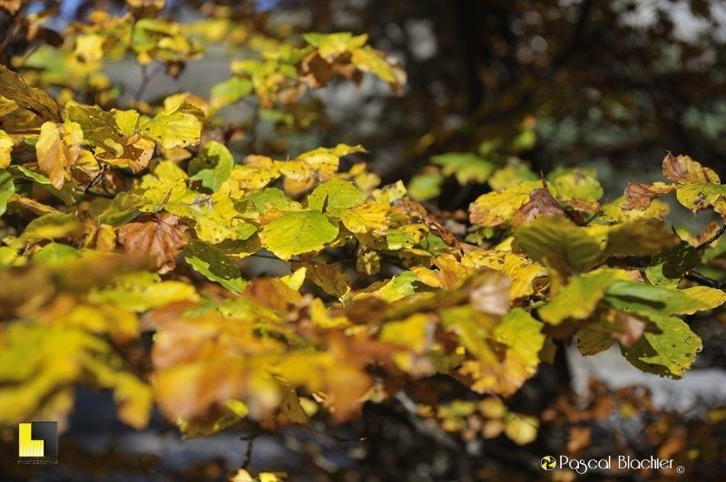 couleurs d'automne photo blachier pascal