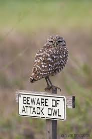 http://www.kxly.com/news/owl-attacks-louisiana-officer-causes-crash/37137832