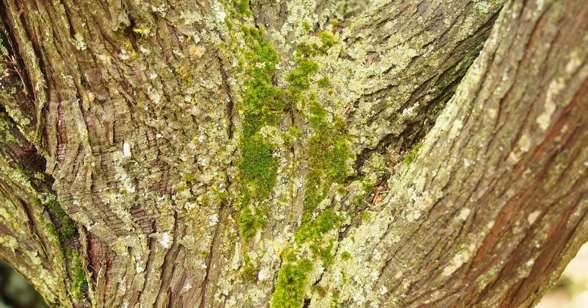 El jard n de la alegr a musgo y l quenes en los troncos for El jardin de la alegria cordoba