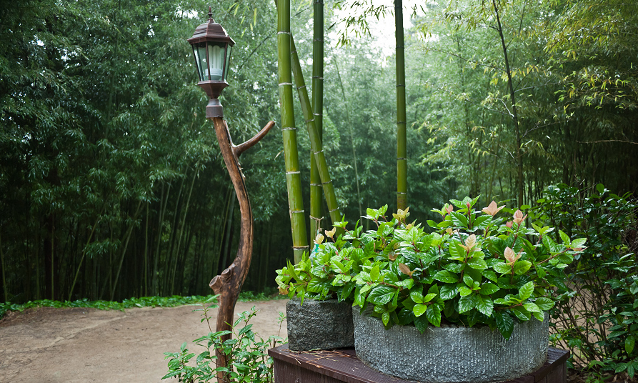 Forest Grove Backyard Burning : Bamboo forest is cooler than outdoors weather, because bamboos